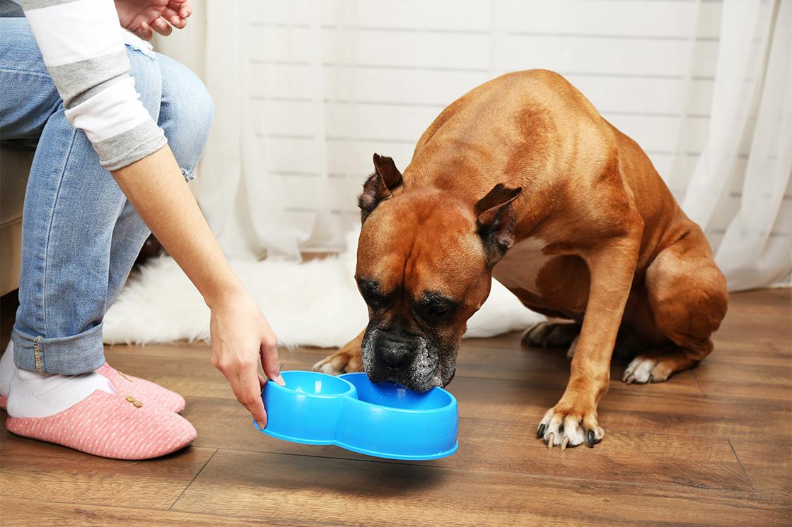 Kennen Sie einfache Pflegetipps für Ihre Hunde