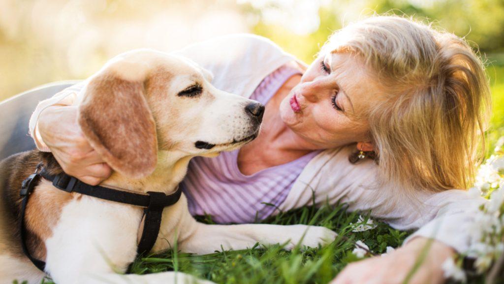 Pflegetipps für Ihre Hunde